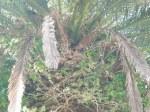 sehr schoene Papageien, leider ist das Foto nicht so gut